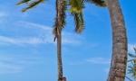 cap-cana_punta-cana_dominican_republic_29